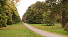 Free Trees In The Autumn Stock Photos - 18636333