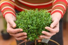 Free Plant In Hands Stock Photo - 18636440