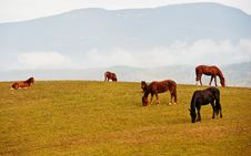 Free Horses On A Pasture Royalty Free Stock Photos - 18636708
