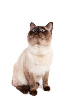 Free Cat Sitting Royalty Free Stock Photos - 18637038