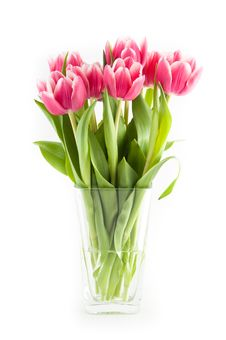 Free Tulips Royalty Free Stock Photography - 18637677