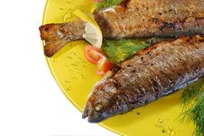 Trout Grilled Stock Photography