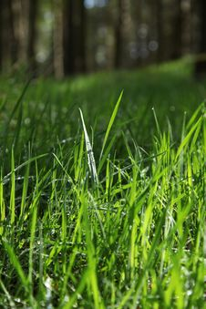 Free Blades Of Grass Royalty Free Stock Photo - 18638665