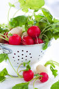 Free Fresh Radish Royalty Free Stock Photos - 18640588