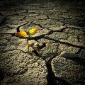 Free Cracked Lifeless Soil Royalty Free Stock Photo - 18644755