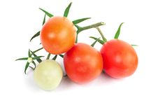 Free Juicy Perfect Tomatoes Stock Images - 18643354