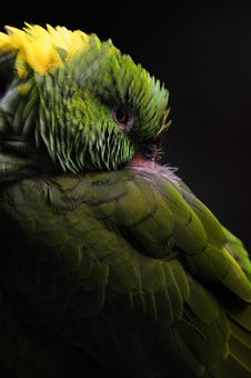 Free Green Parrot Stock Photo - 18644000