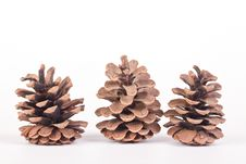 Free Three Pine Cones Royalty Free Stock Image - 18644046