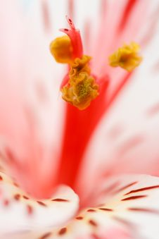 Free Macro Beautiful Flower Stock Photo - 18644900