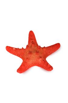 Free Red Starfish Stock Images - 18646614