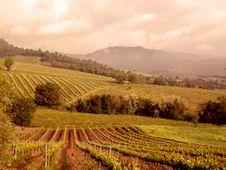 Free Vineyards Stock Images - 18646864