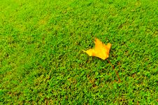 Free Single Leaf On Grass In Autumn Colours Royalty Free Stock Photos - 18647238