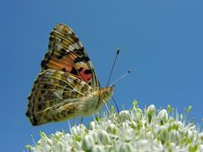 Free Butterfly Stock Photo - 18650640