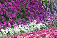 Free Colorful Flowers In The Garden Royalty Free Stock Image - 18650916