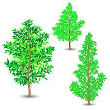 Free Tree Stock Photo - 18652550
