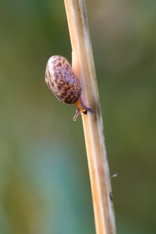 Free Snail Stock Photography - 18660752