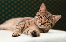 Free Tabby Cat Laying On Side Royalty Free Stock Photos - 18661178