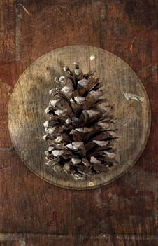 Still Life With Pine Cone Royalty Free Stock Images