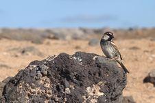 Free Sparrow Royalty Free Stock Photos - 18662848
