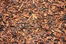 Free Dry Tobacco Royalty Free Stock Image - 18662856
