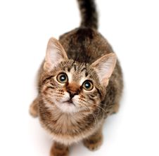 Free Kitten Sits On White Background Stock Photography - 18663142