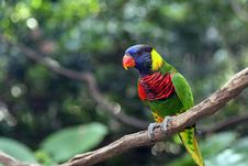 Free Colorful Parrot Royalty Free Stock Image - 18664556