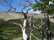 Free Trees In Tierro Del Fuego National Park Royalty Free Stock Images - 18665449