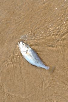 Free Fish Stock Photos - 18665933
