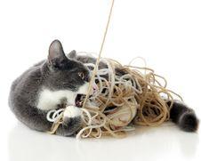 Cat Attack Stock Photo