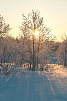 Free Polar Forest Royalty Free Stock Images - 18666789