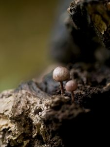 Free Toadstools On A Tree Stock Photos - 18667363