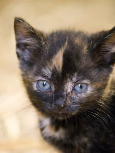 Free Cute Kitten Stock Photos - 18668273