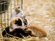 Free Cute Kittens Royalty Free Stock Photography - 18668287