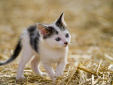 Free Cute Kitten Royalty Free Stock Photography - 18668347