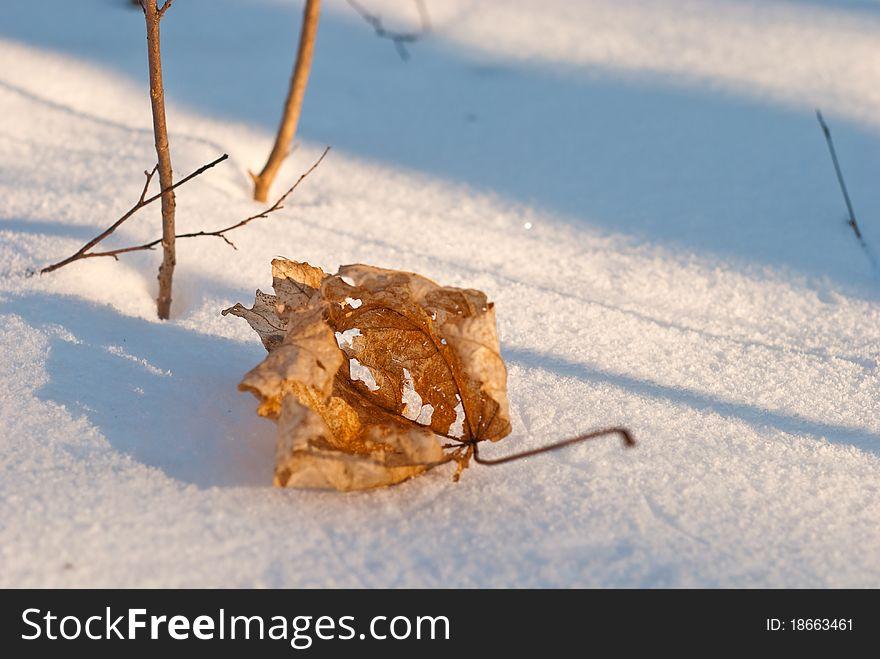 Frozen leaf
