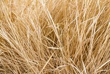 Free Dry Grass Royalty Free Stock Images - 18670109