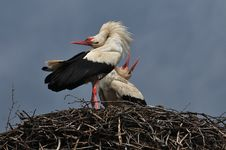 Free Stork Stock Images - 18670384