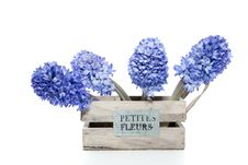 Free Blue Hyacinths Stock Images - 18672334