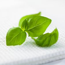Free Basil Stock Photography - 18672932