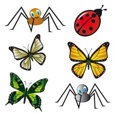 Free Insect Collection Stock Images - 18675484