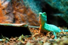 Free Green Lizard Stock Image - 18677461