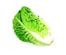 Free Lettuce Royalty Free Stock Photos - 18678788