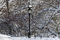 Free Central Park After Snow Storm Stock Photos - 18681513