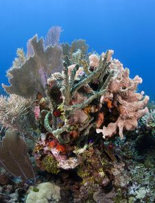 Free Coral Gardens Stock Photography - 18681682