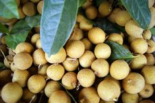 Free Longan Stock Photography - 18685802