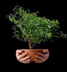 Free Small Tree In The Hands Of Men Royalty Free Stock Photo - 18686805