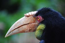 Free Hornbill Profile Stock Images - 18687854