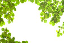Free Green Leaves From Bottom View Royalty Free Stock Image - 18688676