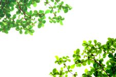 Free Green Leaves From Bottom View Royalty Free Stock Images - 18688679