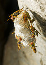 Free Hornet S Nest In A Tree Stock Photography - 18691882
